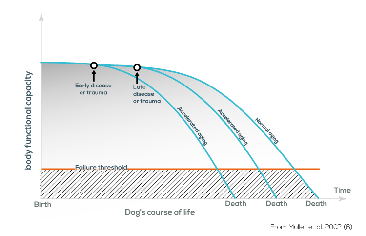 Dog natural aging graph