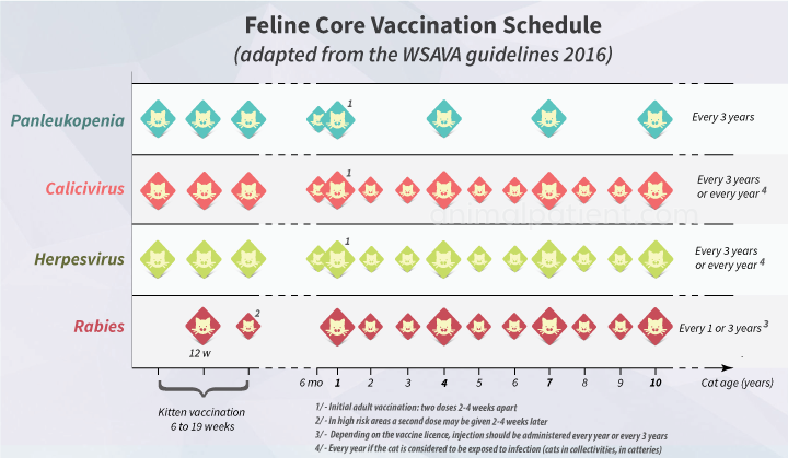 Chart of cat vaccination schedule with core vaccines